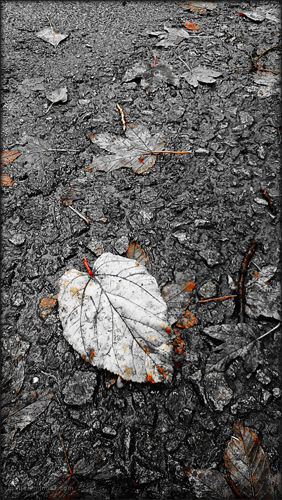 burial of a dead leaf....