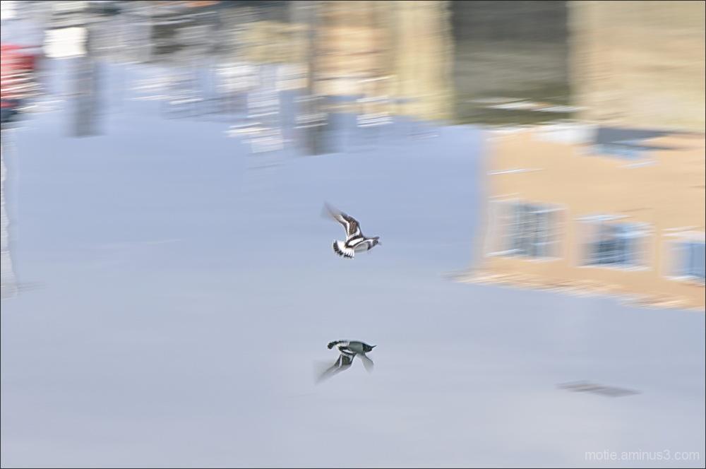 Flying II