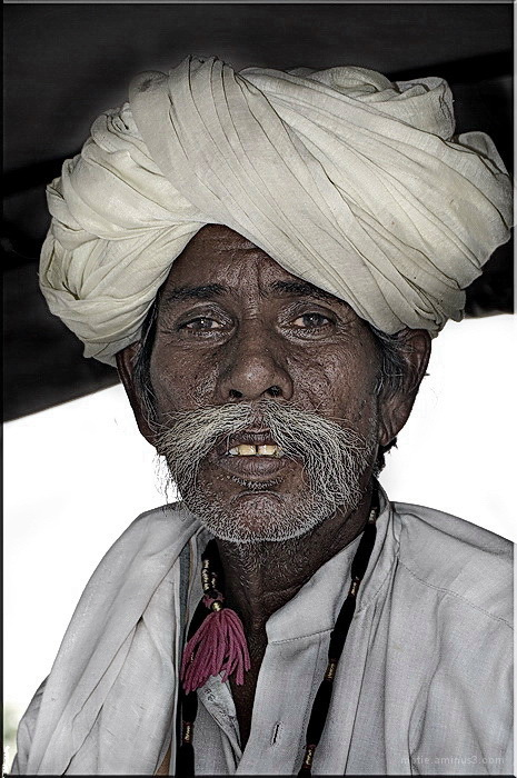 Whiskers from Rajasthan