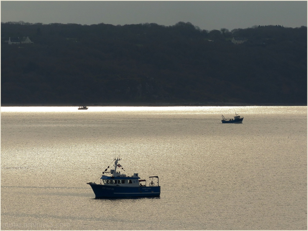 Fishing on Golden sea