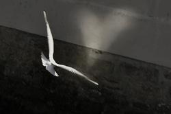Wings of love / L'amour donne des ailes