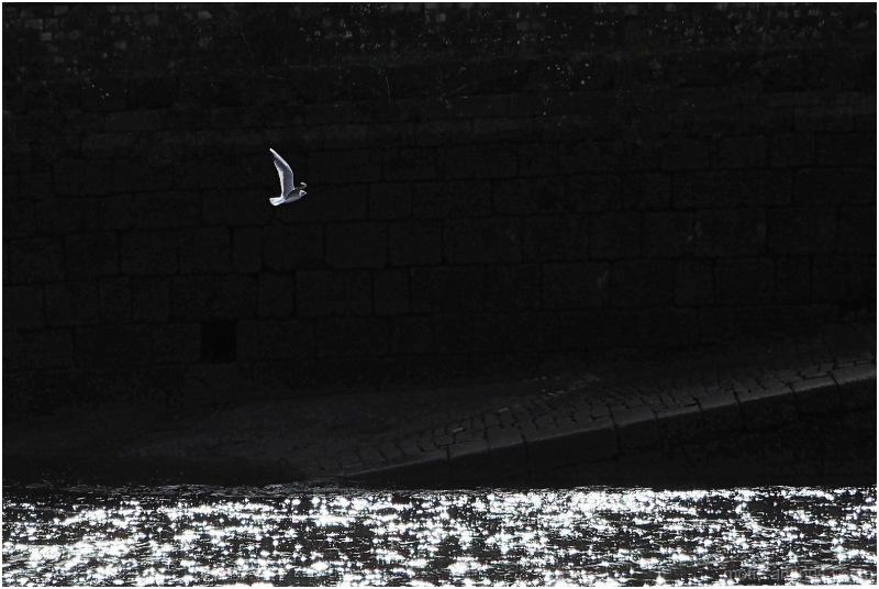Flying in the light