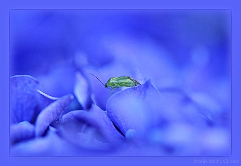 ~~~~Le Grand Bleu ~~~~~The Big Blue~~~~
