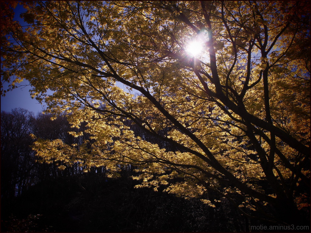 Light enlightens the mind...