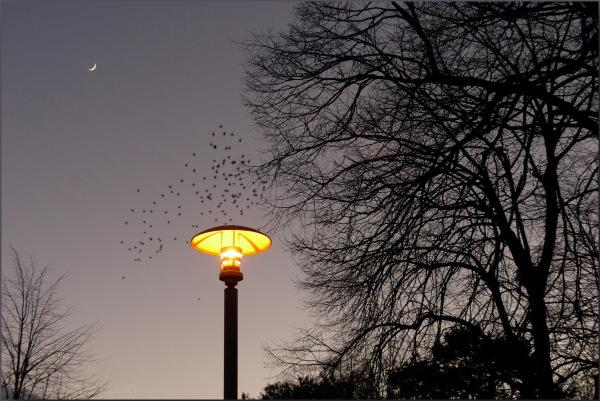 Sortilège de la nuit....