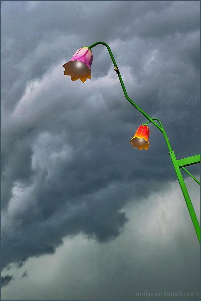 Clochettes sous l'orage