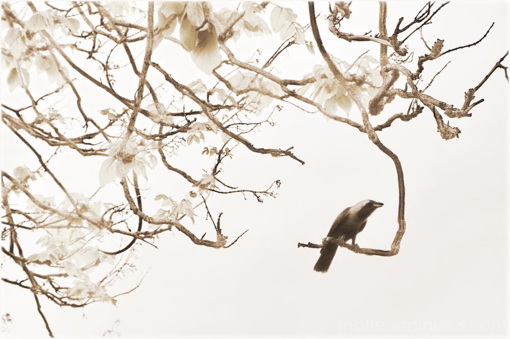 Singing the spring