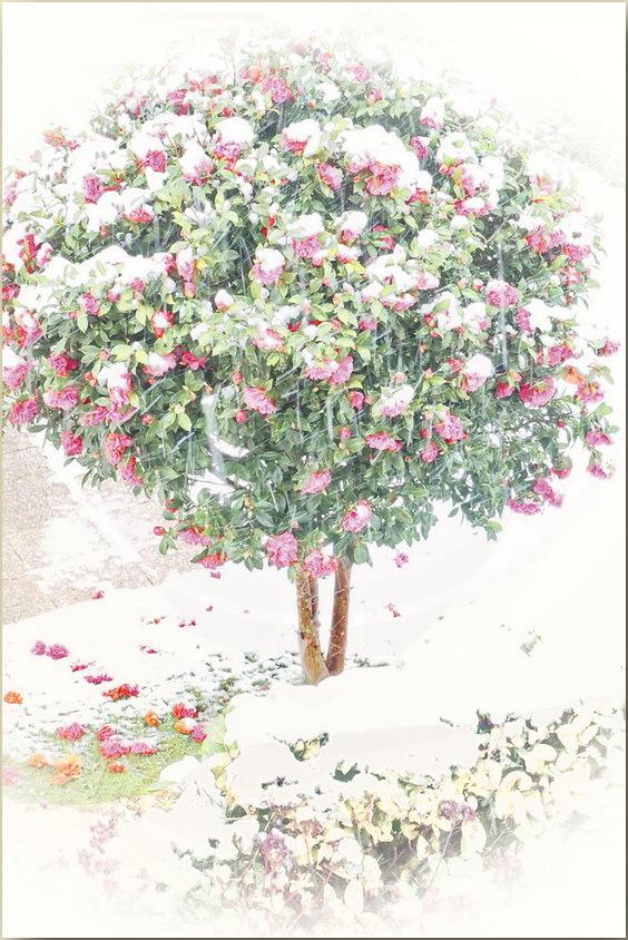 En mars, manteau de neige dans les prés...