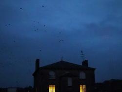 Les oiseaux...