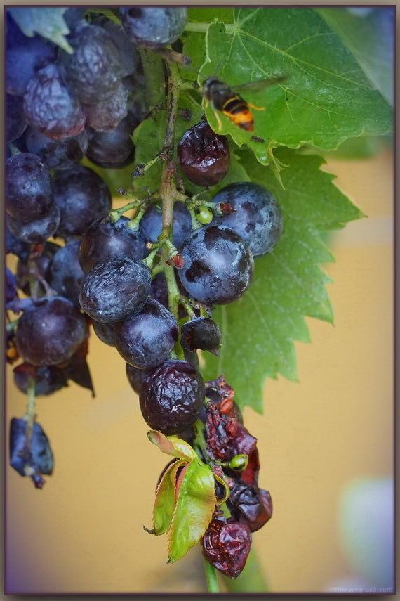 Le sang de la vigne 2