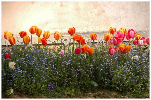 Il est où le printemps...Il est où ?