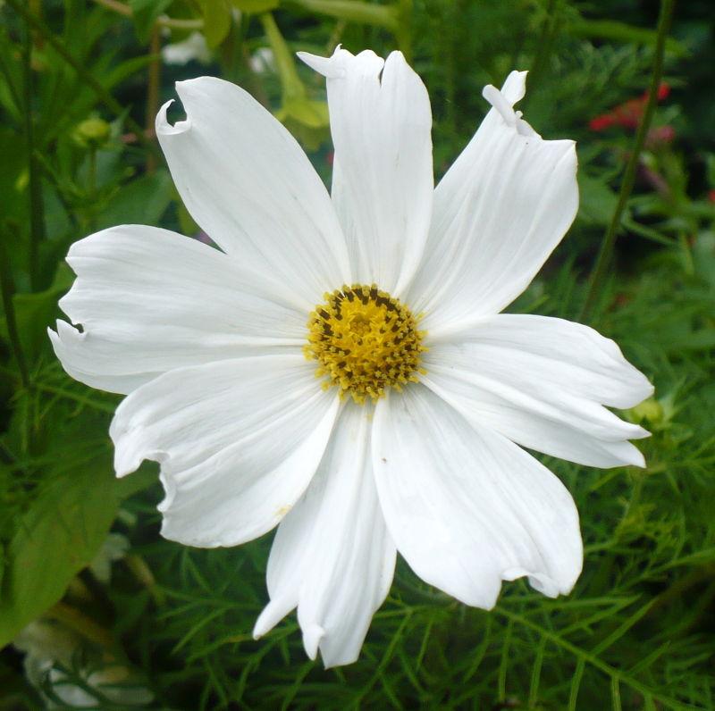 Blomma 2
