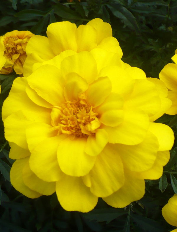 Blomma 9