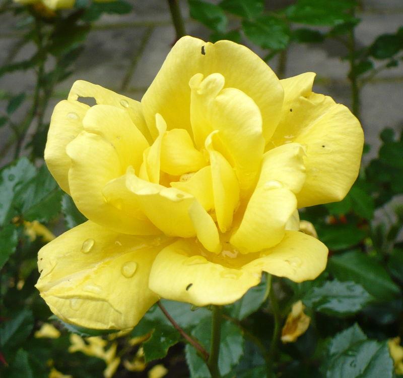 Blomma 14