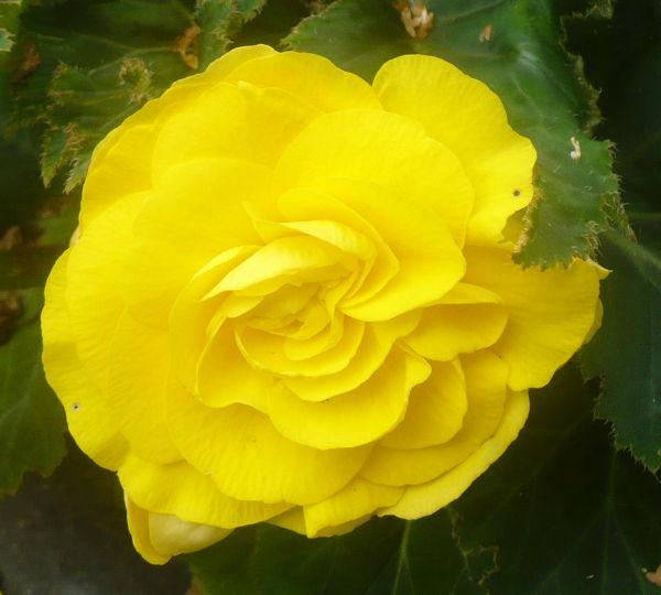 Blomma 15