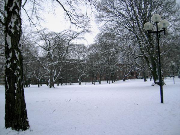 Snö i Stadsparken 2