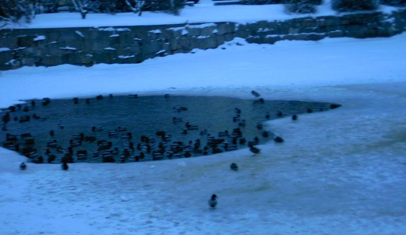 Änder i snö