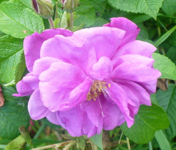 Blomma 45