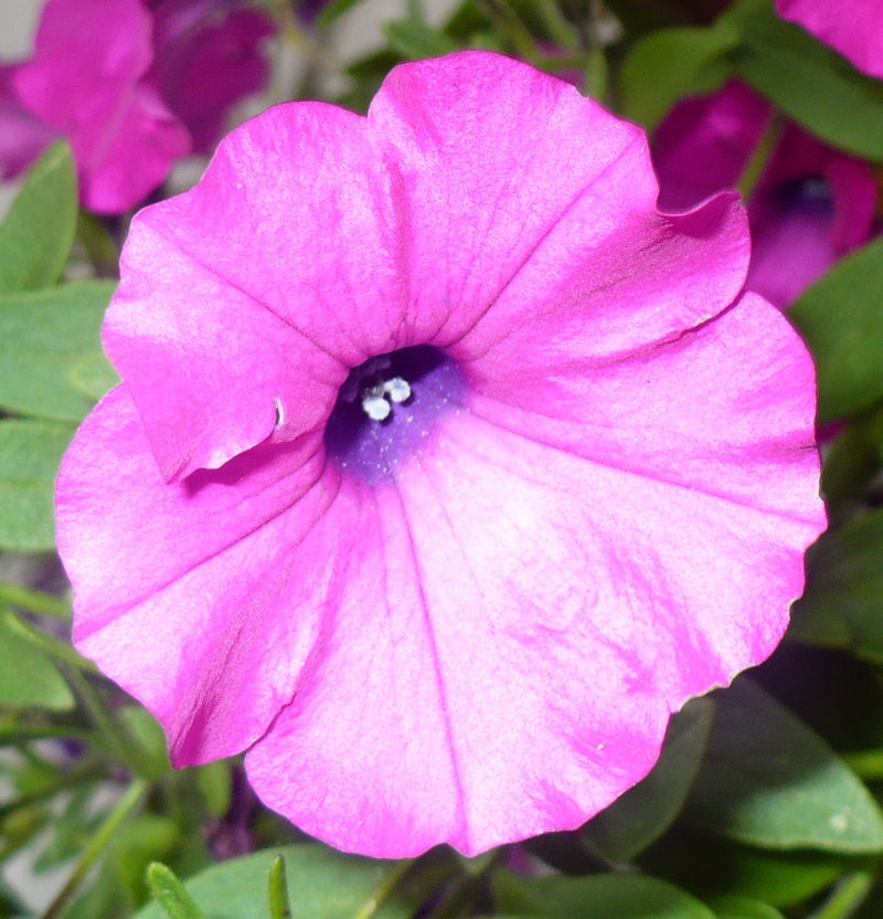 Blomma 53