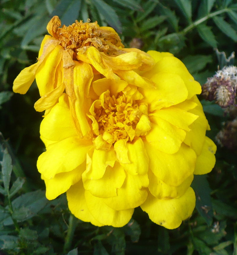 Blomma 54