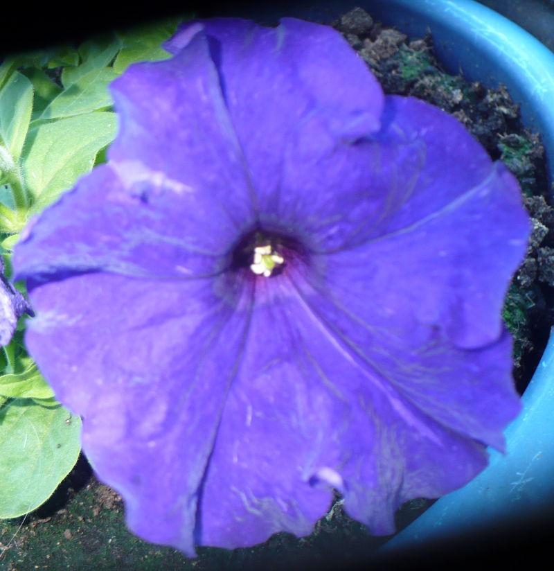 Blomma 47
