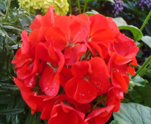 Blomma 59