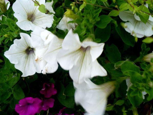 Blomma 113