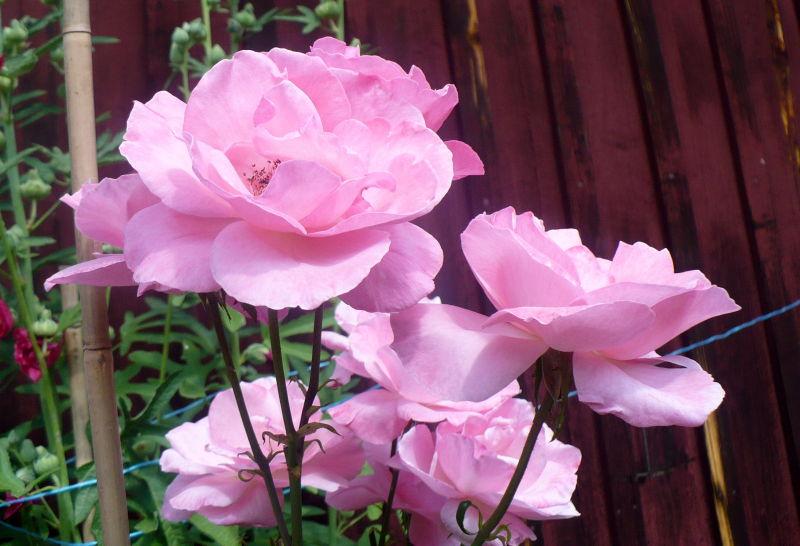 Blomma 123