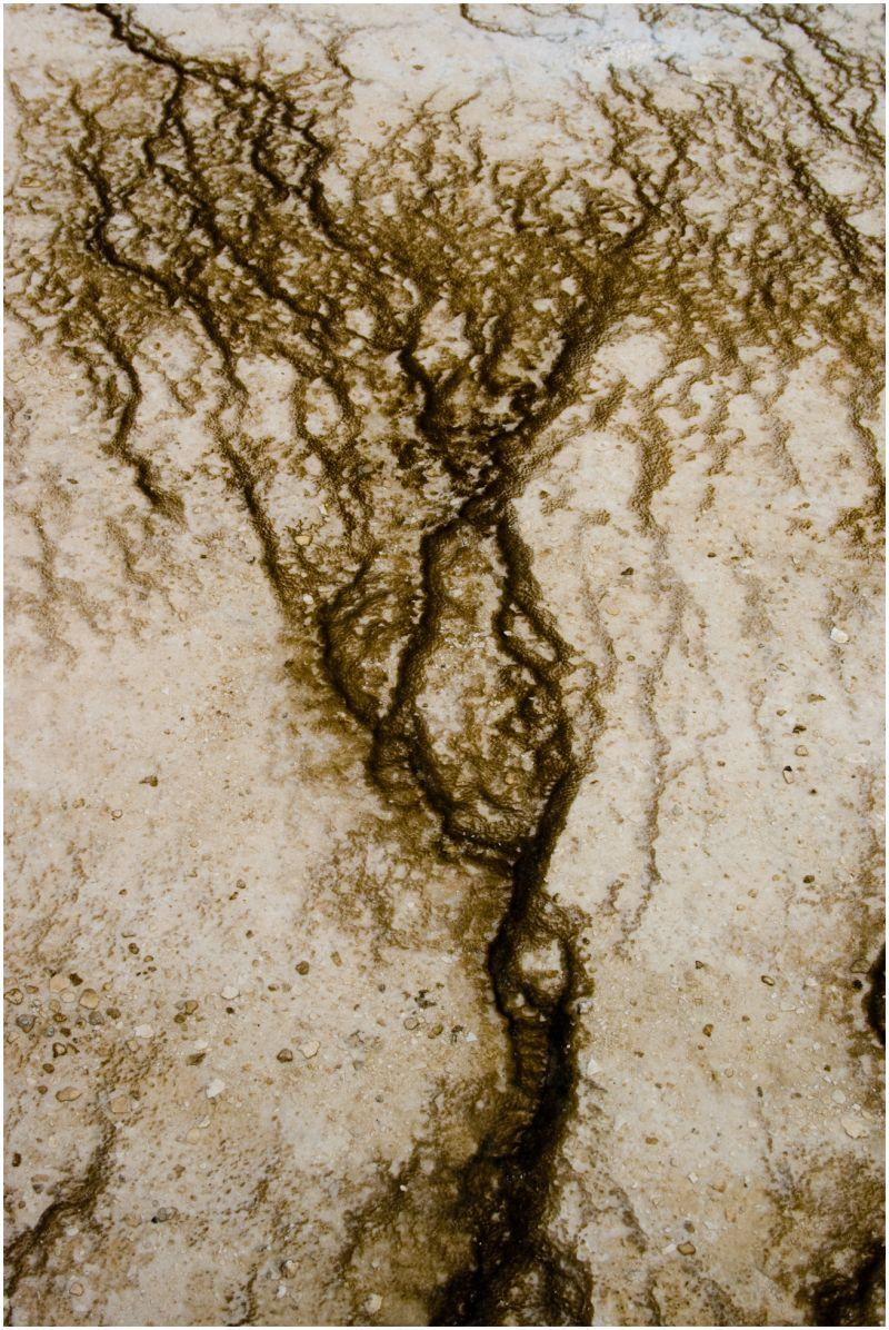 bacterial mat Yellowstone