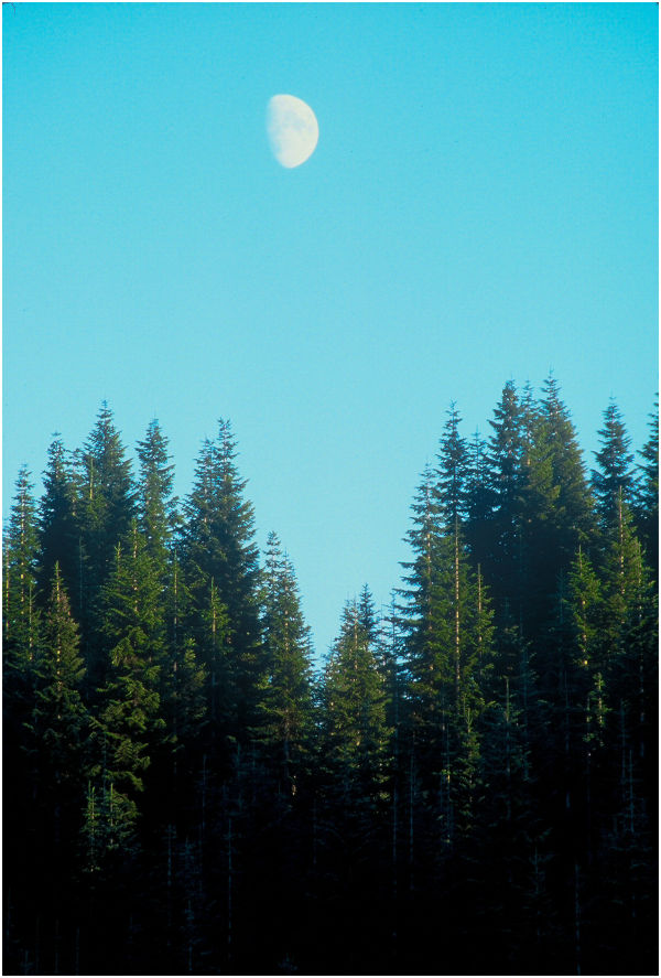 Moon over Pines