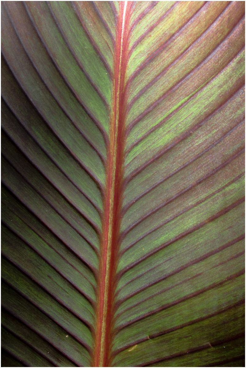 Green with Red Leaf