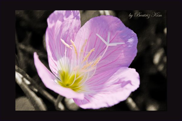 beautiful pink flower macro