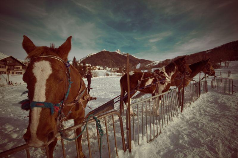 Des Cheveaux dans la neige