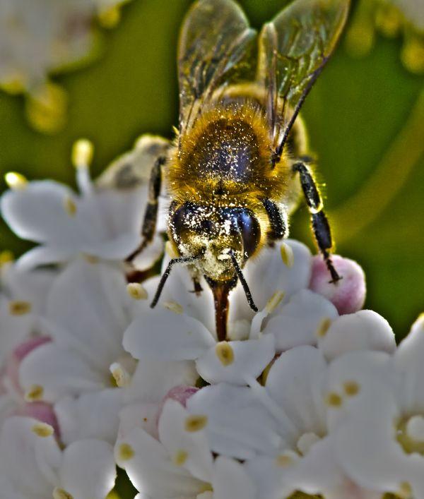 une abeille de plus