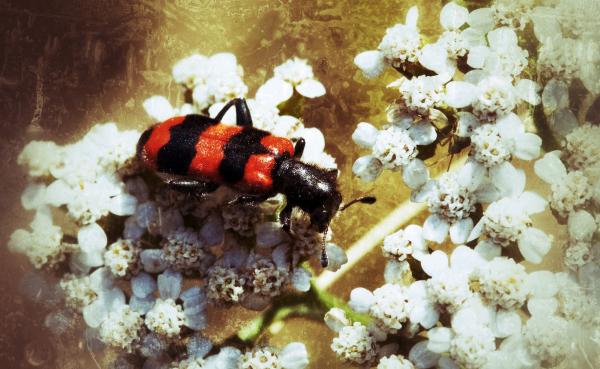 un petit bug 2