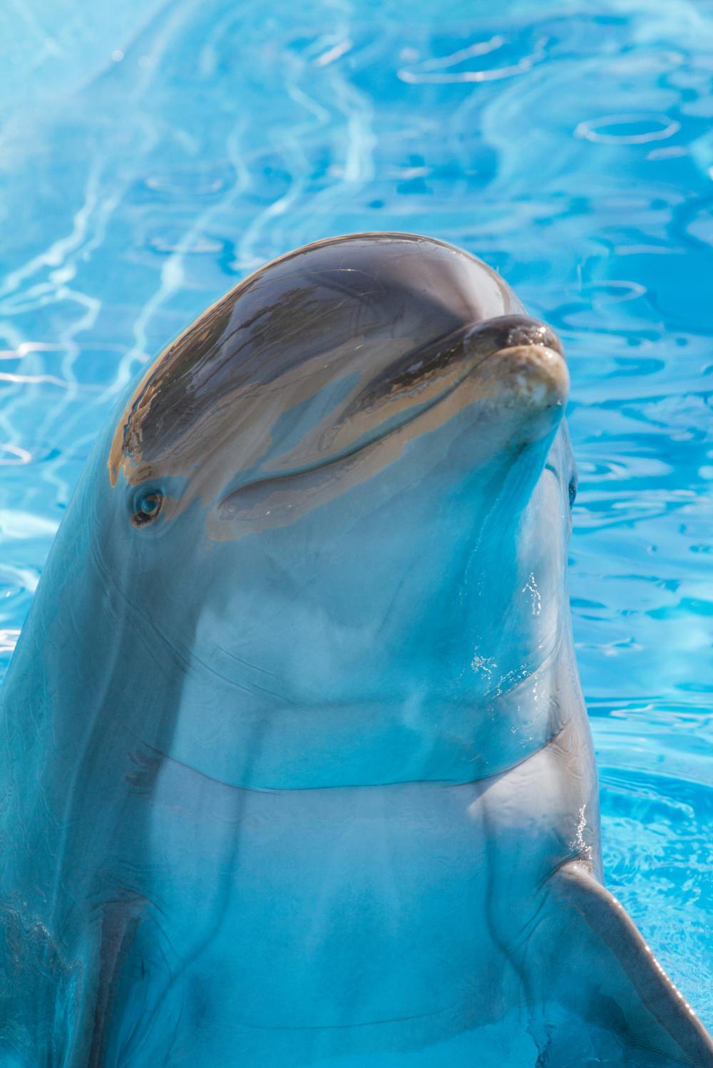 Portrait dauphin