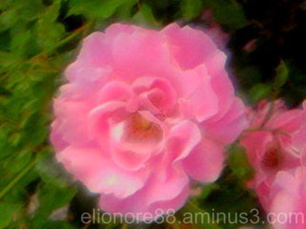 Blomma 6