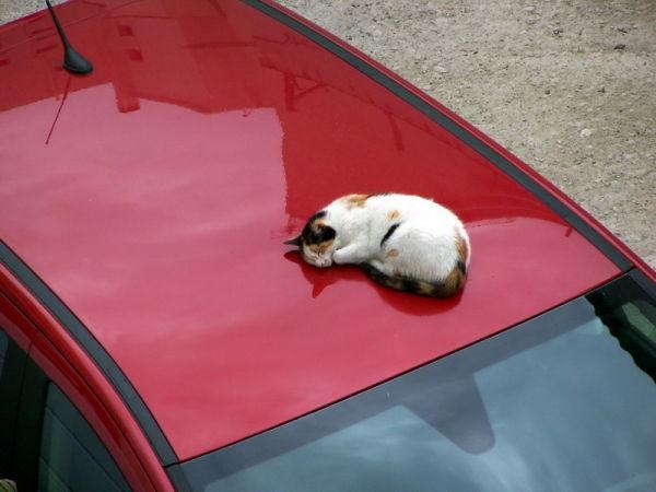 Cat sleeping on a car