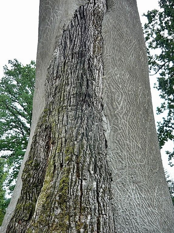 A symbol - tree