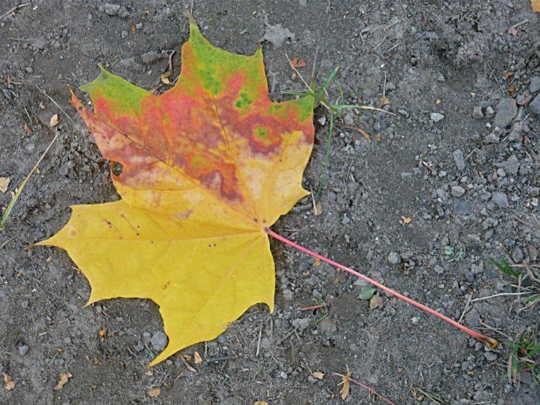 Autumn in Finland 5