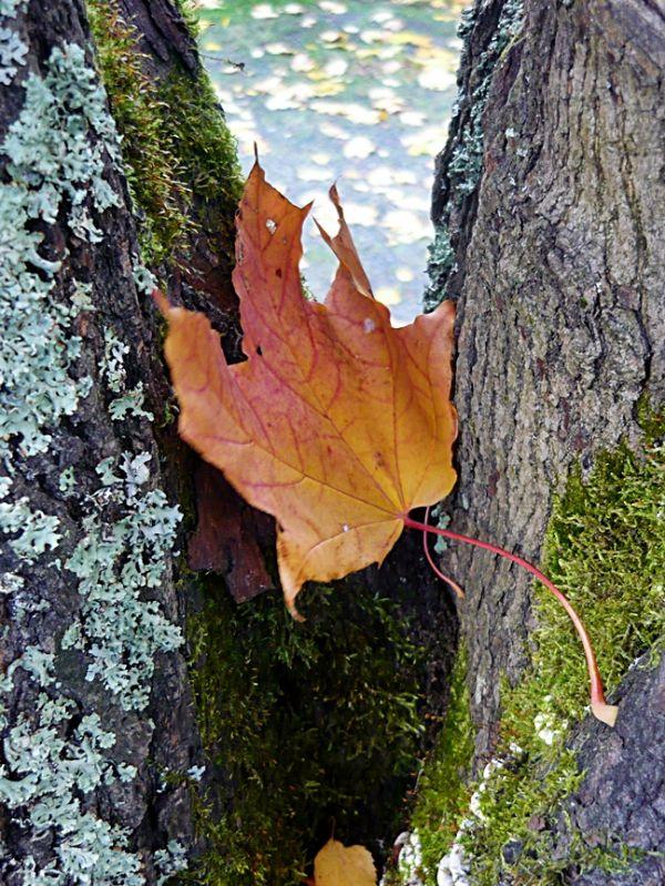 Autumn in Finland 7