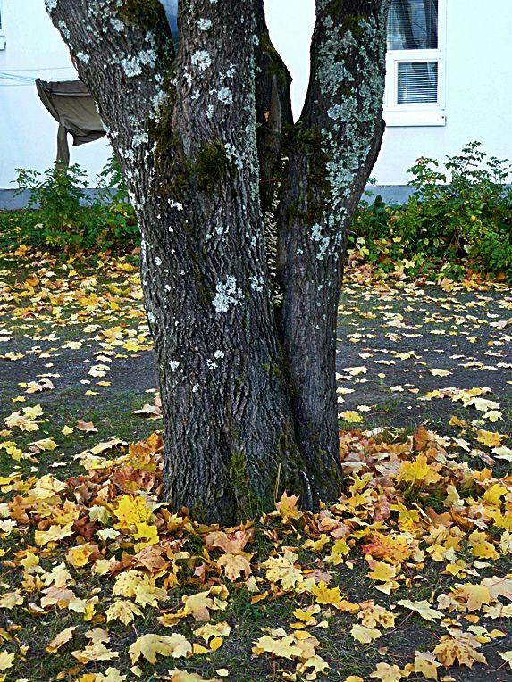 Autumn in Finland 8