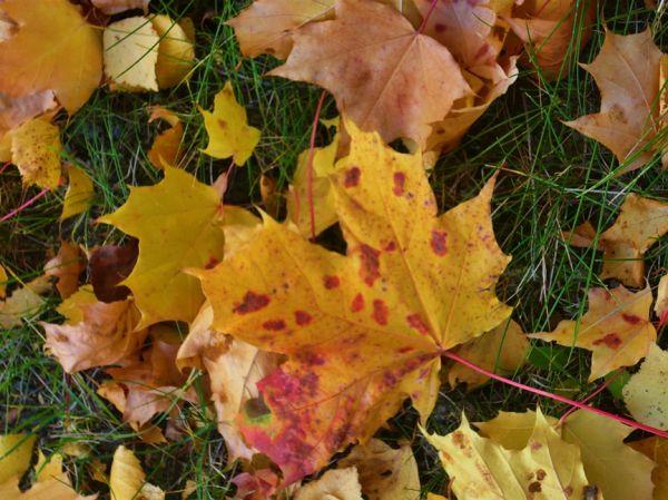 Autumn in Finland 16