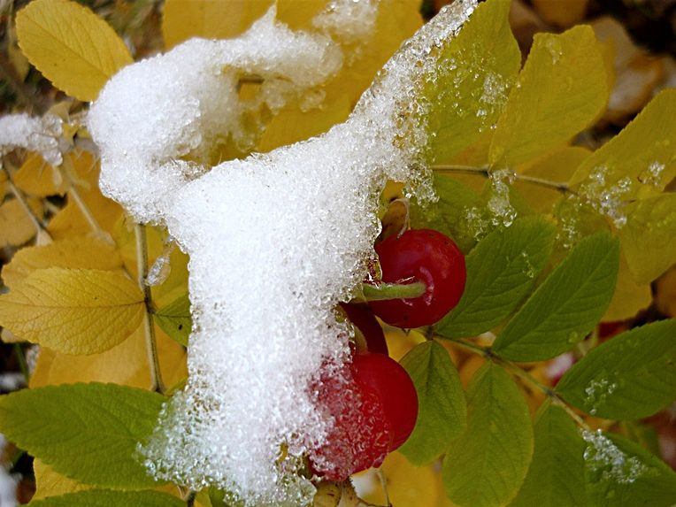 Autumn + winter