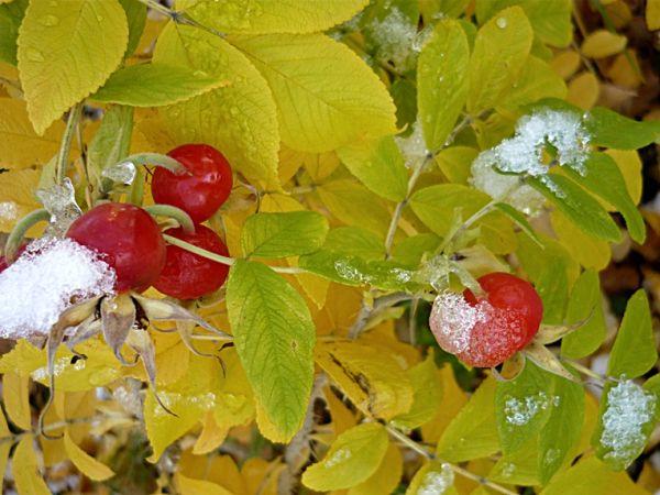 Autumn + winter 9