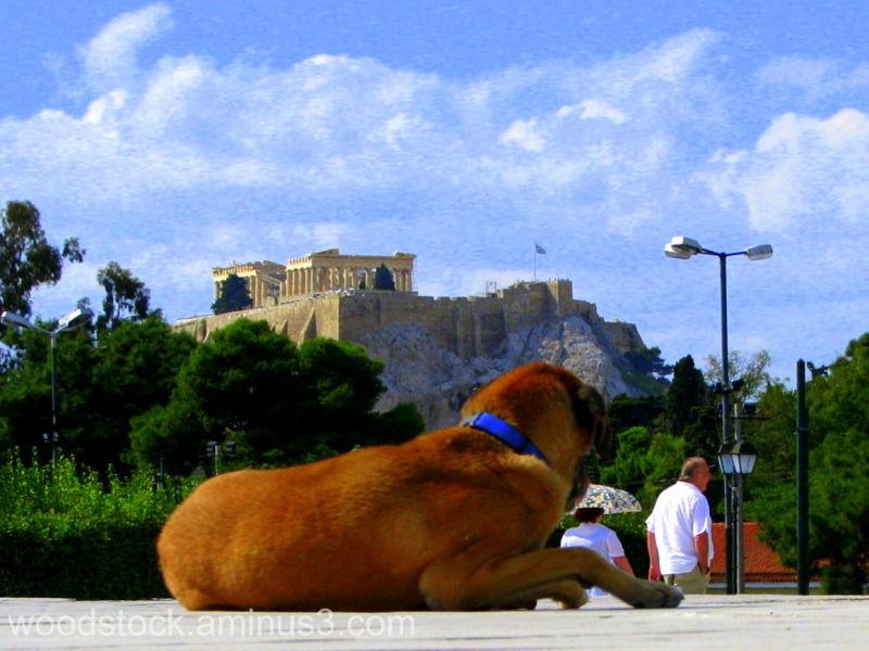 Dog Athens Acropolis