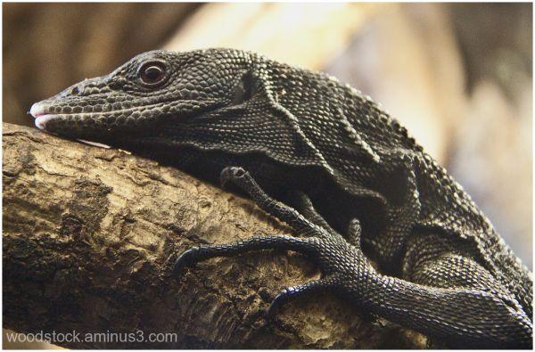 Reptile - Newquay Zoo