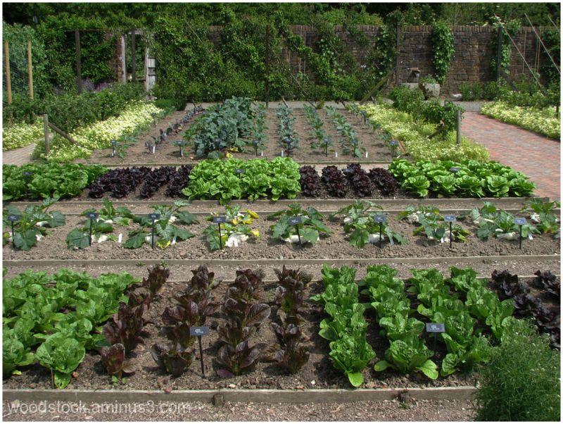 A Real Veg Garden (1 of 3)