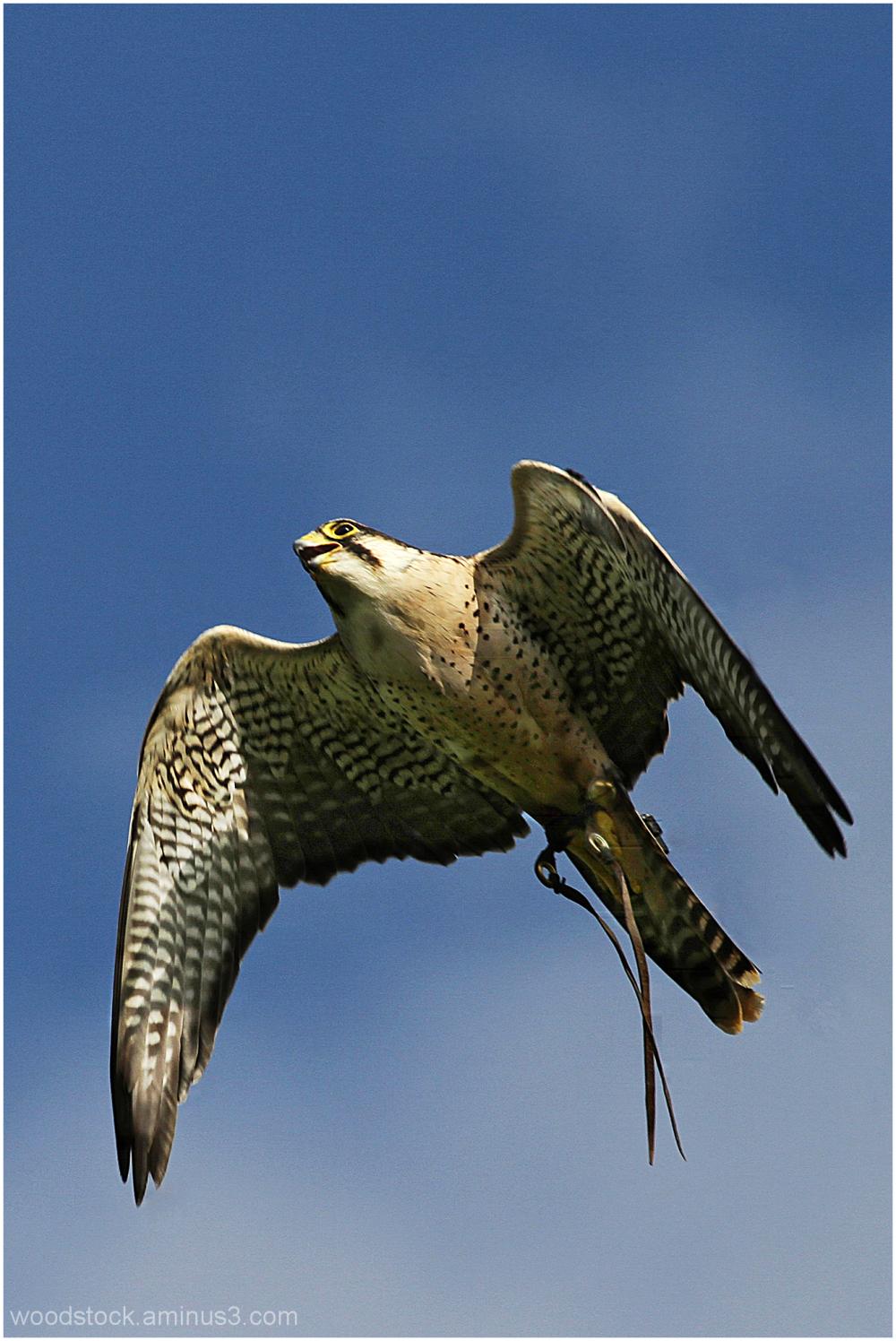 Newent Bird of Prey Centre
