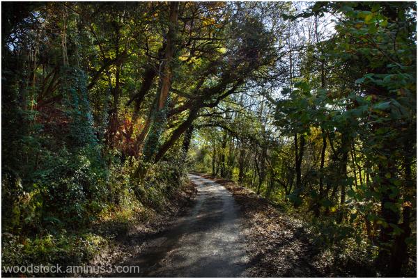 Take Me Home Country Road
